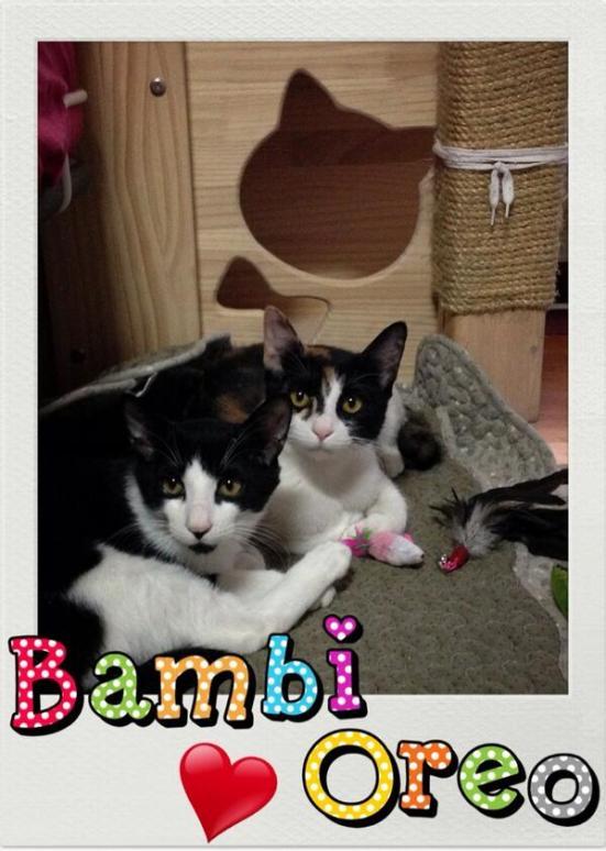 @krungy21: ♥Bambi & Oreo♥